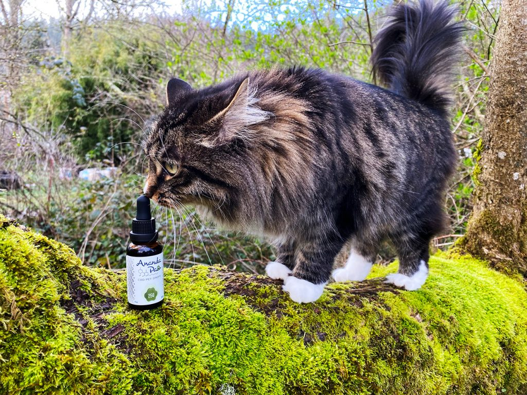 A fluffy feline delicately touches the tip of her nose to a bottle of Ananda Paw CBD Pet Drops, while perched on a mossy tree branch.